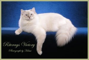 Riterags Sire King - Victory